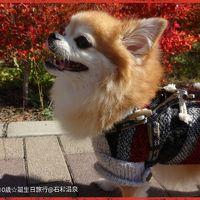 ◆犬旅◆ 山梨/石和【かんぽの宿 石和温泉】~祝10歳の誕生日&車椅子でも安心バリアフリー旅~週末2日間(2016.11)