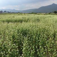忍野八海と花畑(ソバとダリア)ウォーキング