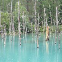 蘇りました!北海道美瑛 青い池♪