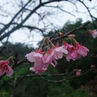 2013年1月 冬の沖縄の旅