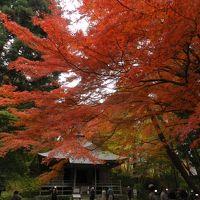 平泉・中尊寺の紅葉が見頃でした〜♪(前半)◆2015年11月/岩手県の紅葉&滝めぐりの旅≪その7≫