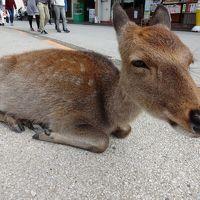 日帰り宮島ほとんど鹿三昧の旅