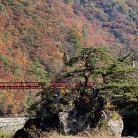 みちのく秋彩巡り 抱返り渓谷