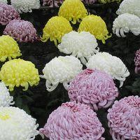 菊が綺麗!11月の太宰府天満宮&鳥獣戯画を見に九州国立博物館へ。