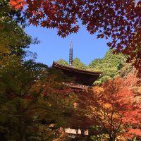 去年とは違う滋賀県の紅葉の魅力に酔いしれる☆ Part I 石山寺、湖東三山編
