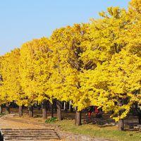 黄葉と紅葉の国営昭和記念公園