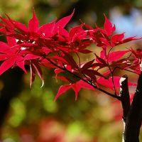 箱根美術館 紅葉に見入る 初見