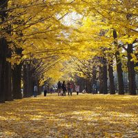 秋色に染まった昭和記念公園!