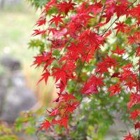 琵琶湖畔で紅葉と芸術と食欲の秋満喫 �