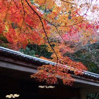 姫路城・有馬温泉紅葉の旅