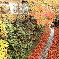 週末の紅葉高尾山は超混雑