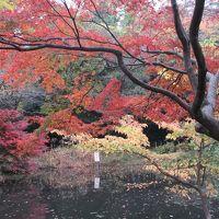 石神井公園に行ってきました