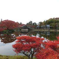 昭和記念公園の黄色紅葉まつり