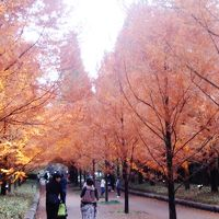 兵庫、六甲山の紅葉を追って!