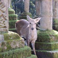 鹿と歴史に囲まれ一人旅 in 奈良 �日目
