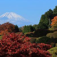 箱根で紅葉狩り2016年