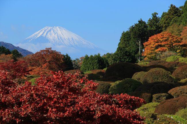 箱根では紅葉が見頃な様だし、天気予報では晴れマークだったので早起きして出かけました。<br />恩賜箱根公園に着いた頃は、雲が多く富士山もほとんど隠れていてちょっと残念でしたが、段々天候が良くなり小田急山のホテルに着いた頃には富士山がくっきりと見える様になりました。富士山が見られるとテンションが上がりますね。<br />紅葉は思っていたより綺麗でした。小田急山のホテルは紅葉の穴場の様な感じです。<br /><行程><br />恩賜箱根公園→箱根神社→小田急山のホテル→岡田美術館・庭園→蓬莱園→千条の滝→箱根湯寮<br />表紙は、小田急山のホテル庭園から見た富士山と紅葉