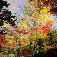 ◆晩秋のみちのく須賀川紅葉めぐり(牡丹園編)