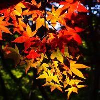 三溪園の紅葉は、京都に負けてなかったですよ!