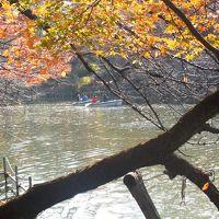 錦秋の武蔵野を歩く-トトロの森からゲゲゲの森へ1.井の頭公園