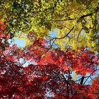【東京散策58】 晩秋の紅葉を見に六義園と旧古河庭園に行ってみた