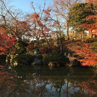 紅葉を見に週末京都へ