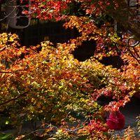 佐賀・福岡の紅葉の名所へ(15) 桜と紅葉の名所・・・秋月城址の紅葉 上巻。