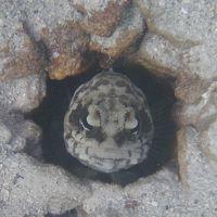 珊瑚がジャンガジャンガなブスアンガ島(ポポトタン島)