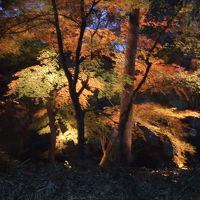六義園のライトアップ 2005/12/03