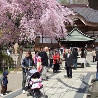 下北沢・深大寺散歩 2006/04/08-09
