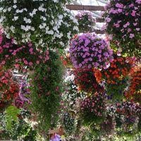 年の瀬の旅:東海道の要衝掛川城から花鳥園へ!