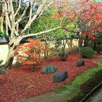 京都散歩 大徳寺でなごり秋を見つけた〜興臨院〜高桐院〜龍源院