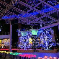 【妄想旅行】あしかがフラワーパーク「光の花の庭」@横浜市内無料.ver