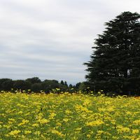2016年10月10日:昭和記念公園 散策 〜黄色いコスモスが見事でした〜