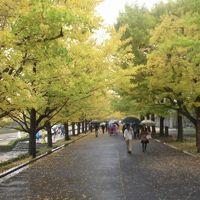 昭和記念公園の風景