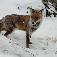 奥日光湯の湖畔で狐に会う。帰りに大谷観音に寄る。