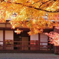 奥津和野の山里にある旧家の庭園を訪ねて (燃えるような紅葉が素晴らしかった)  ①