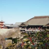 会社の部活動の一環で京都、大阪を巡ってみた
