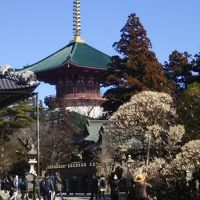 春を探しに!成田山新勝寺&成田山公園