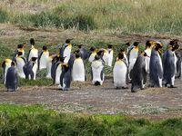 チリ旅行-20:プンタアレナース(ペンギン観光)