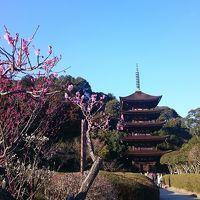 山口の梅☆防府天満宮と瑠璃光寺