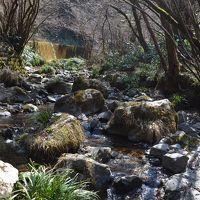 �高尾山健康登山(12) (リフト)−高尾山山頂ーいろはの森ー高尾梅郷ー高尾山温泉