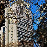 小石川後楽園1/2 梅香る庭園 春の便り届いて ☆東京ドーム:らん展の後で