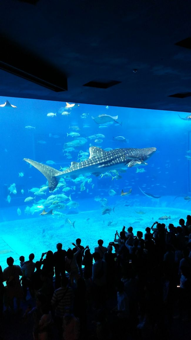 沖縄2日目。もう4回目になりますが,子連れ観光客には絶対はずせない美ら海水族館です。<br />その外,近くの観光スポットにも立ち寄りました。