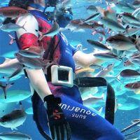 サンシャイン水族館-1 ラグーン:水中パフォーマンスタイム ☆サメ・エイ・・悠々と