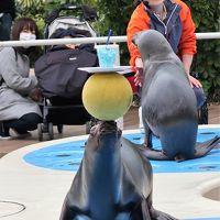 サンシャイン水族館-5 オタリア:アシカパフォーマンス ☆鼻先 器用な技くりだし