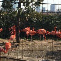 上野動物園ZOOへGO