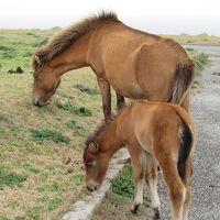 長男旅立ち記念 石垣島与那国島 家族旅行�!いつまでも見ていたい与那国馬は悠然としていた!