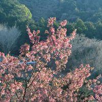 【諏訪の原公園・小田原フラワーガーデン・おかめ桜の里】桜とか梅とか、いろんな花を見に行ったよ。