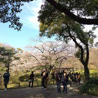 桜最前線速報!東京メトロ日比谷線各駅停車の花見ツアー